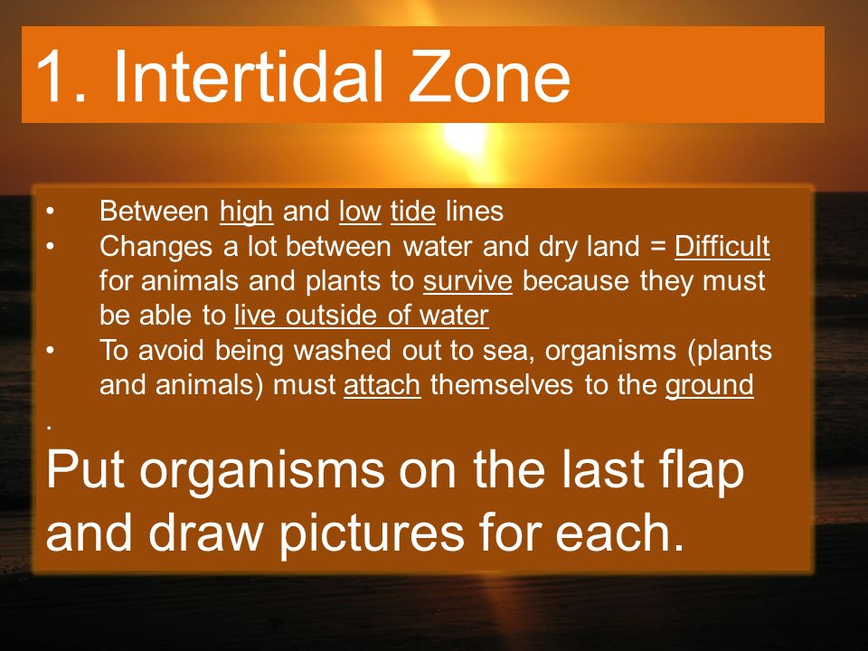 1. Intertidal Zone Between high and low tide lines.