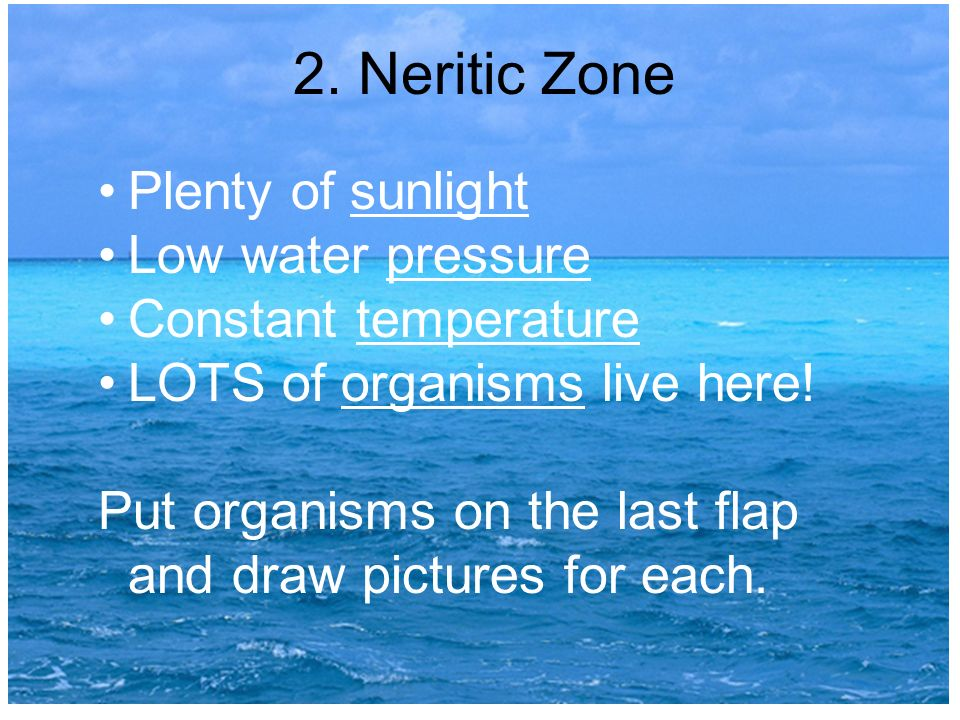 2. Neritic Zone Plenty of sunlight Low water pressure