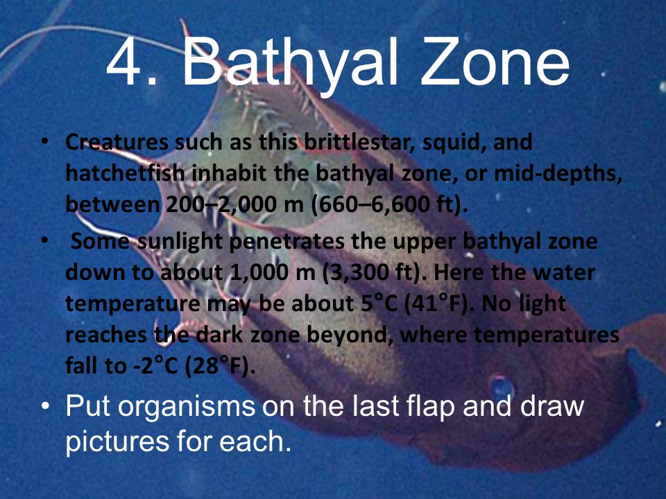 4. Bathyal Zone