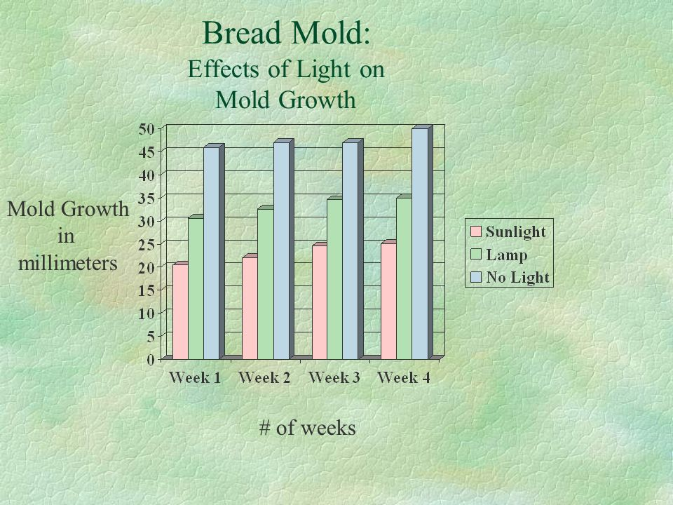 Bread Mold: Effects of Light on Mold Growth