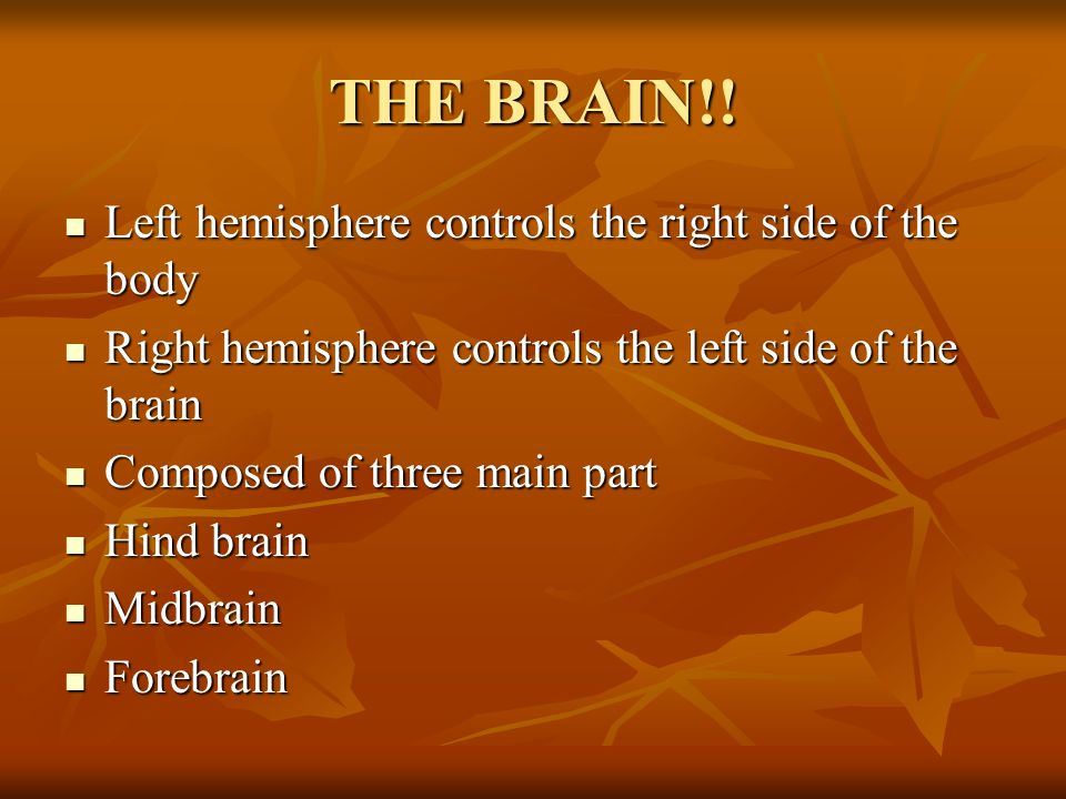 THE BRAIN!! Left hemisphere controls the right side of the body