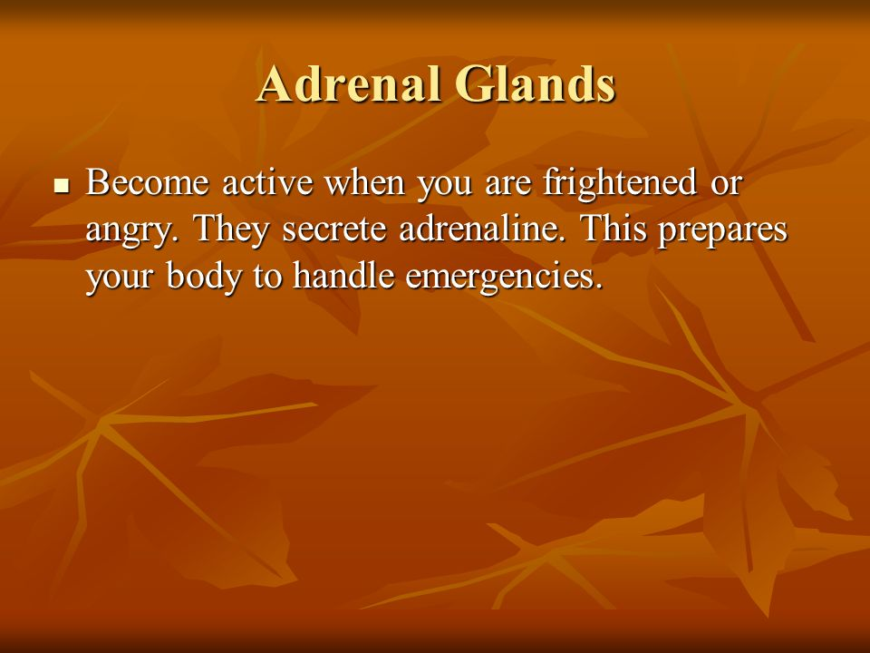 Adrenal Glands Become active when you are frightened or angry.