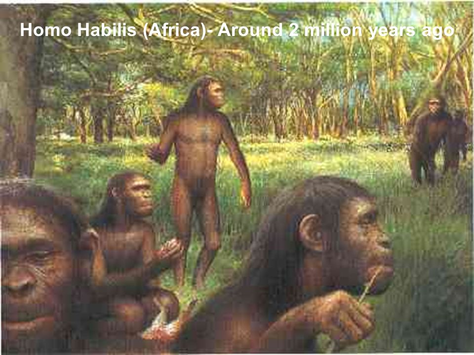 Homo Habilis (Africa)- Around 2 million years ago