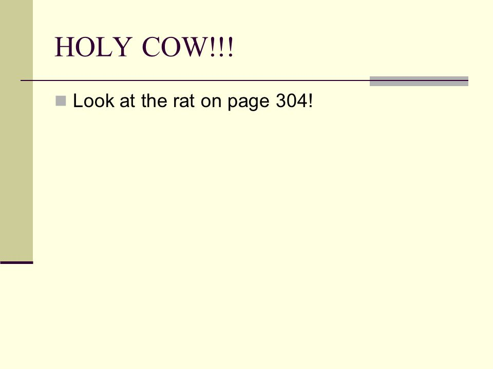 HOLY COW!!! Look at the rat on page 304!
