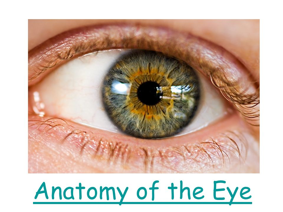 Anatomy Of The Eye Ppt Video Online Download