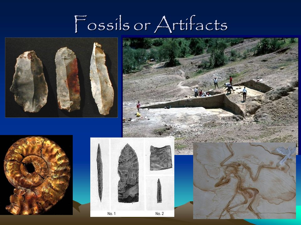 Fossils or Artifacts
