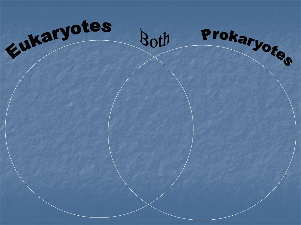 Both Eukaryotes Prokaryotes