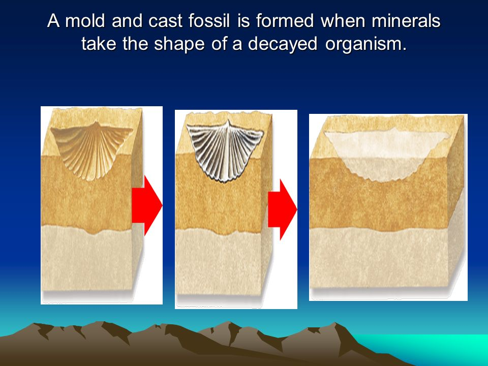 A mold and cast fossil is formed when minerals take the shape of a decayed organism.