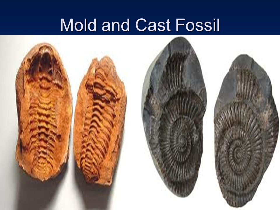 Mold and Cast Fossil