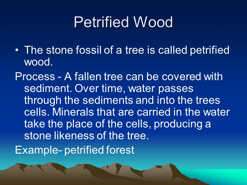 Petrified Wood The stone fossil of a tree is called petrified wood.
