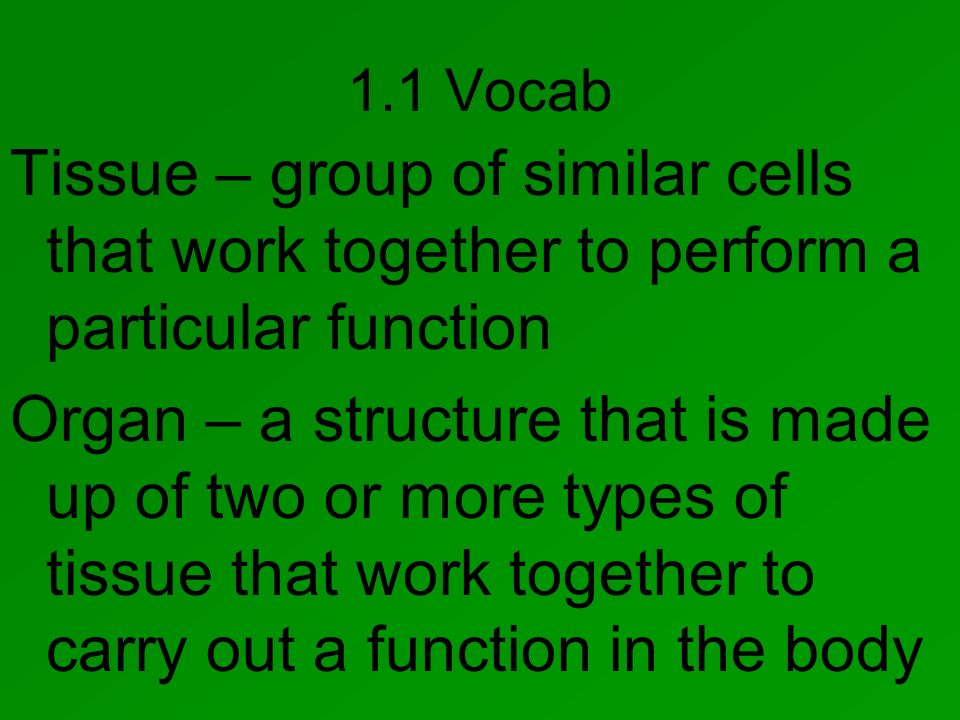 1.1 Vocab Tissue – group of similar cells that work together to perform a particular function.