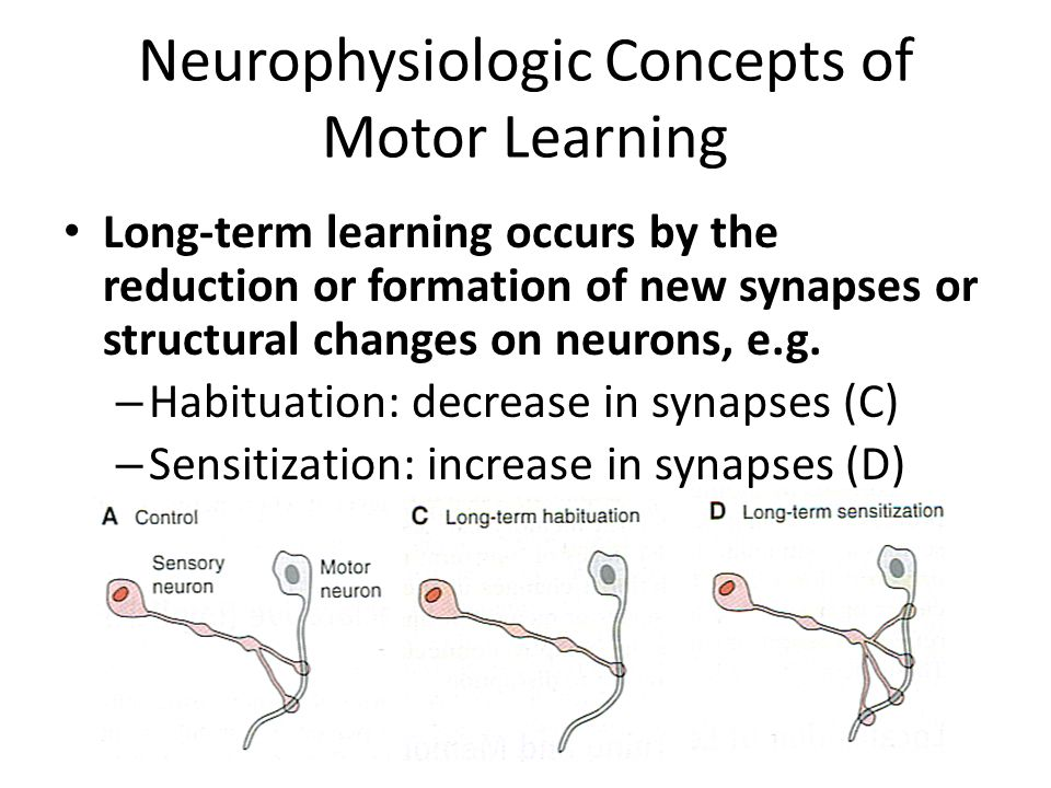 motor learning mid term Knpe 261/30 motor learning and control course instructor: mr nicholas   several features of voluntary motor skills ranging from sensory  midterm exam.