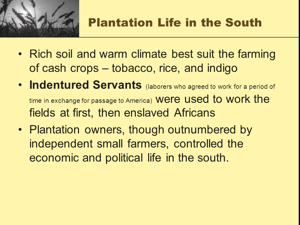 Plantation Life in the South
