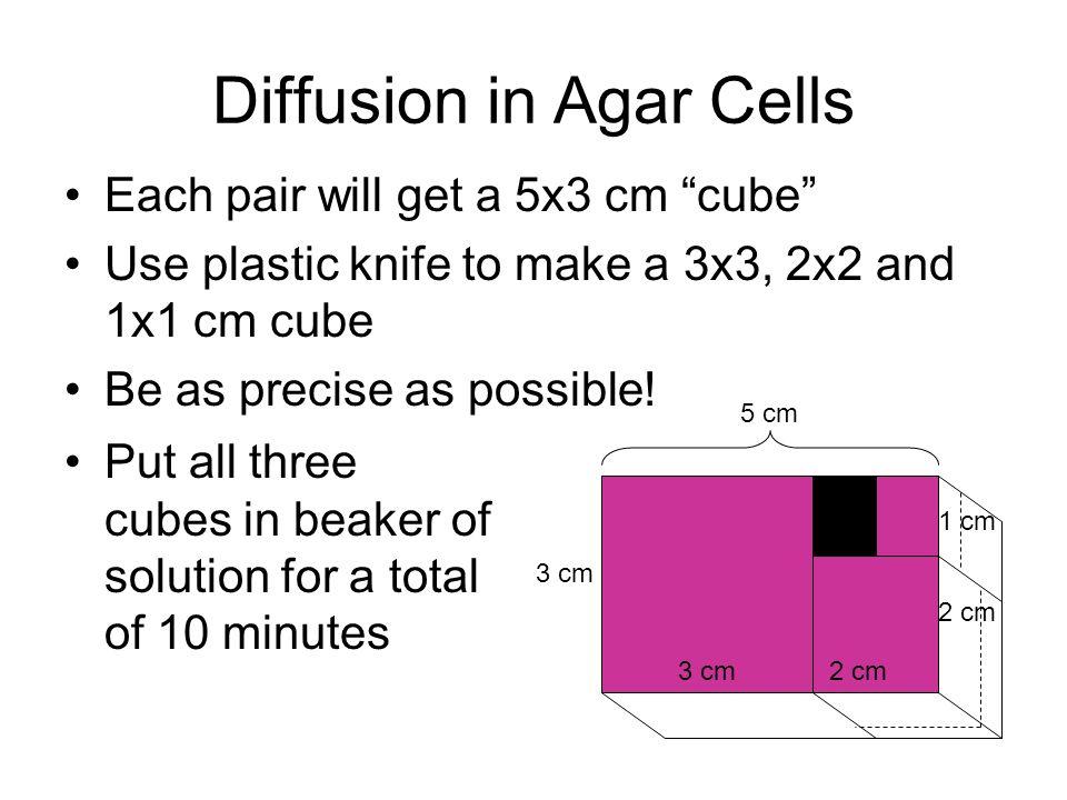 Diffusion in Agar Cells