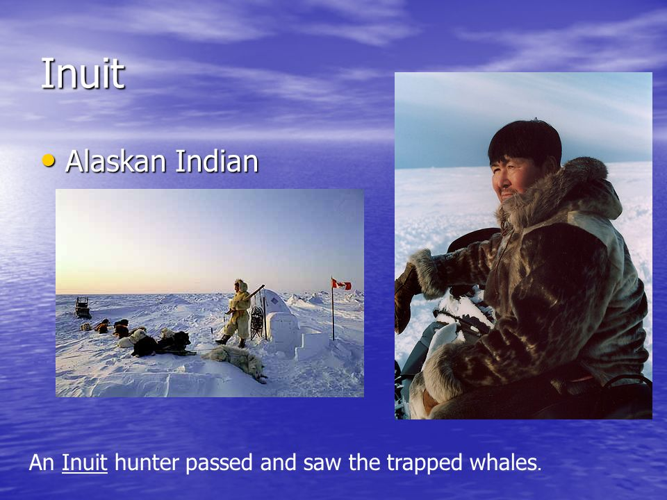 Inuit Alaskan Indian An Inuit hunter passed and saw the trapped whales.