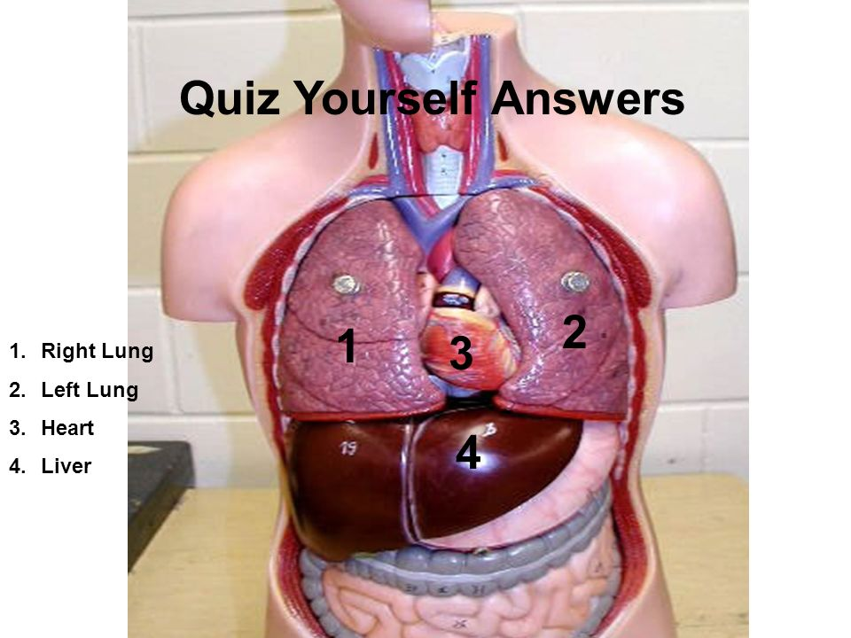 Schön Anatomy And Physiology Quiz Level 3 Galerie - Anatomie Von ...