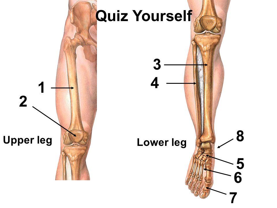 Ausgezeichnet Muscle Anatomy And Physiology Quizzes Zeitgenössisch ...