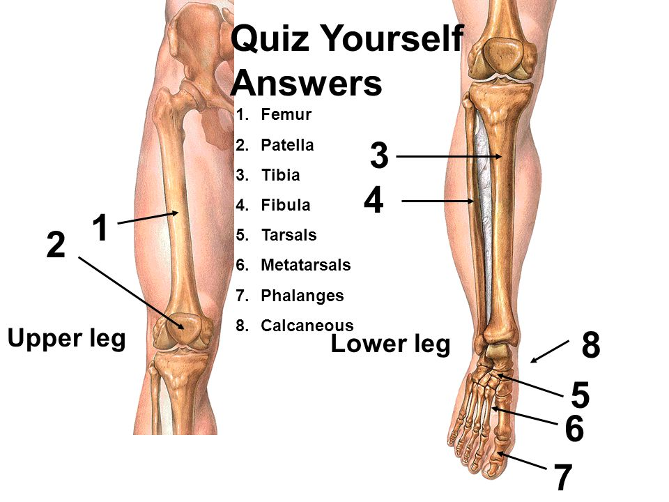 Erfreut Anatomy And Physiology Quiz Level 3 Bilder - Anatomie Von ...