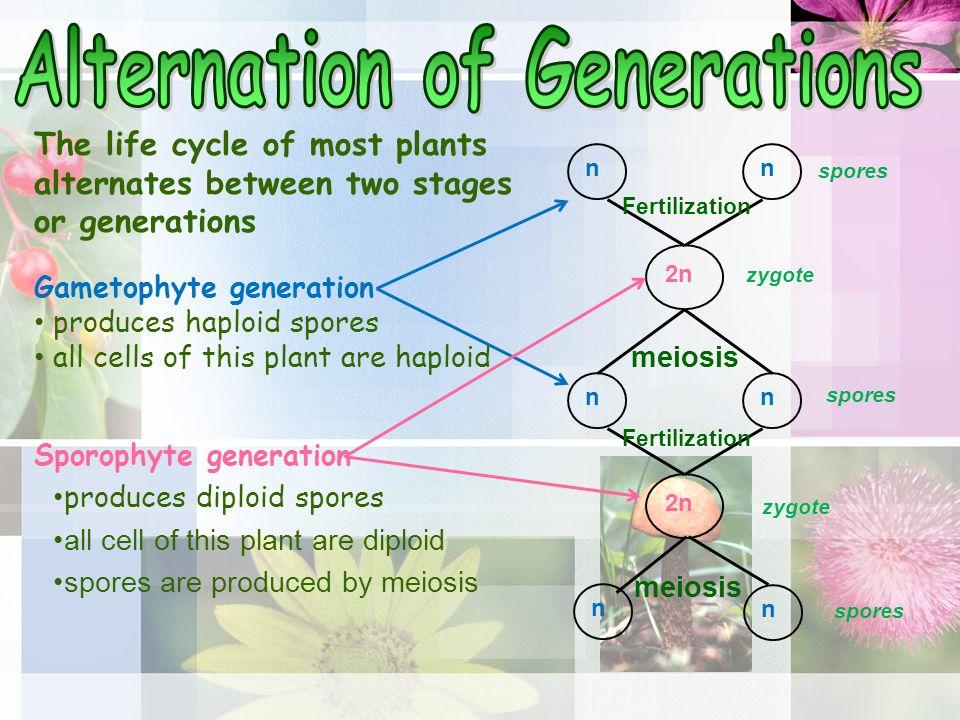 Alternation of generations fungi