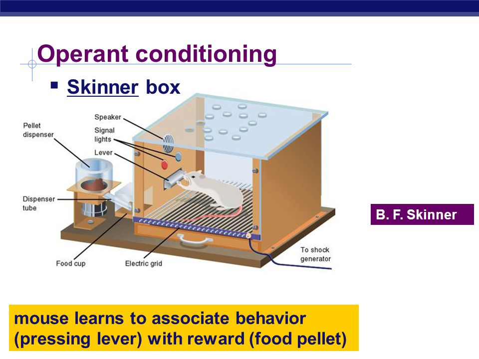 bf skinner operant conditioning theory pdf