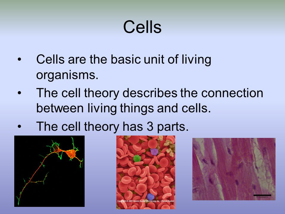 Cells Cells are the basic unit of living organisms.