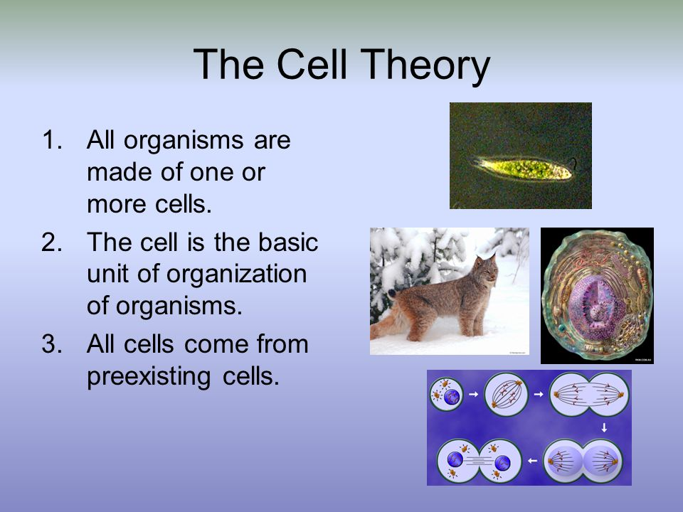 The Cell Theory All organisms are made of one or more cells.