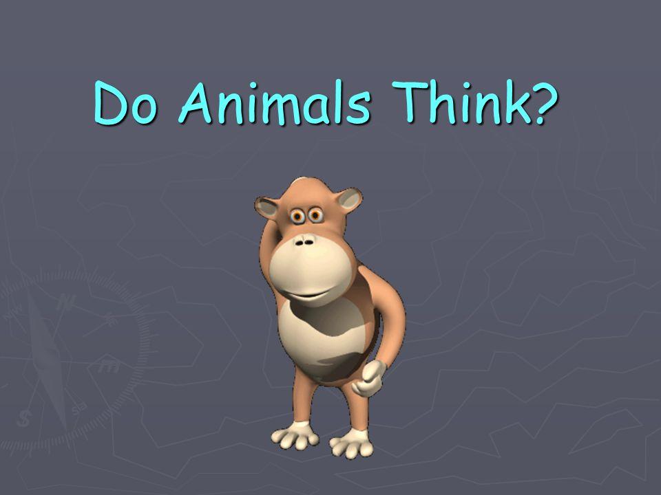 Do Animals Think