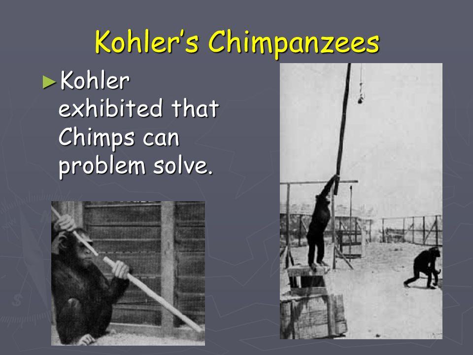 Kohler's Chimpanzees Kohler exhibited that Chimps can problem solve.