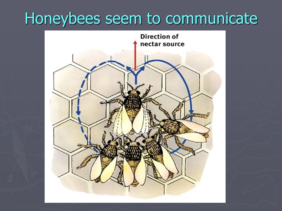 Honeybees seem to communicate