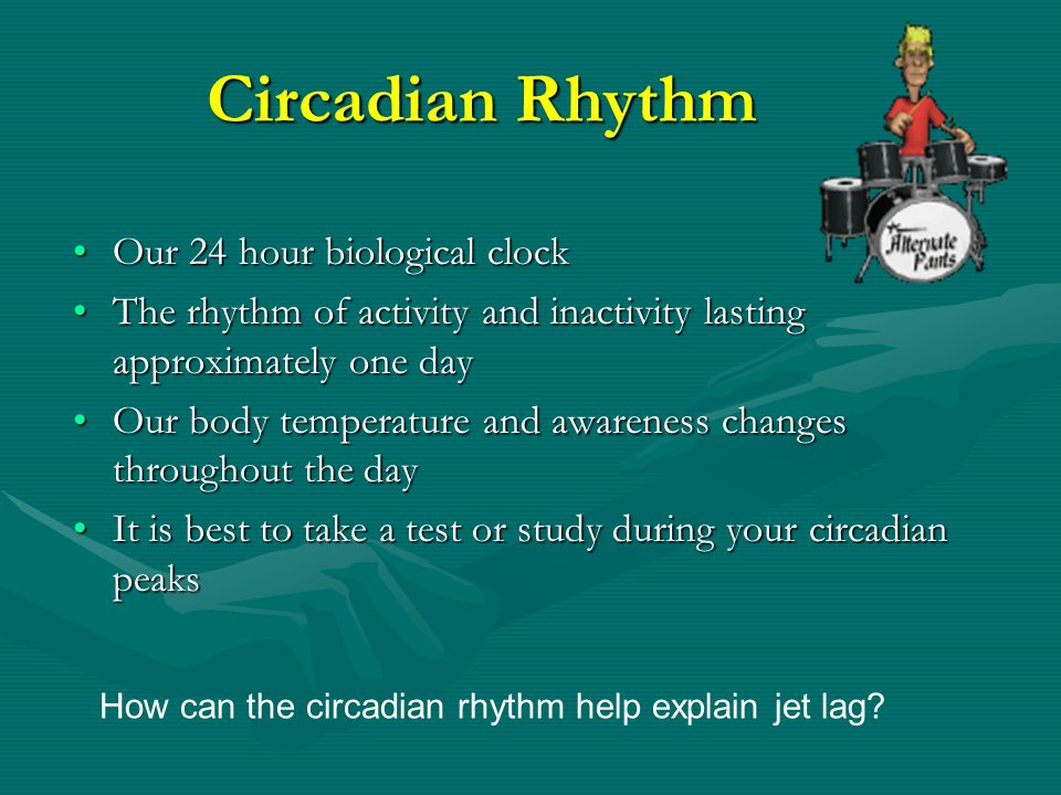 Circadian Rhythm Our 24 hour biological clock