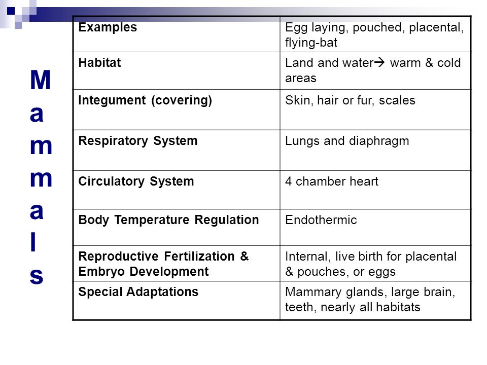 Mammals Examples Egg laying, pouched, placental, flying-bat Habitat