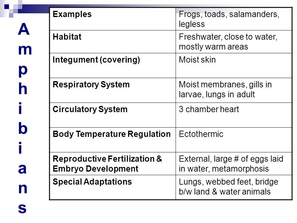 Amphibians Examples Frogs, toads, salamanders, legless Habitat