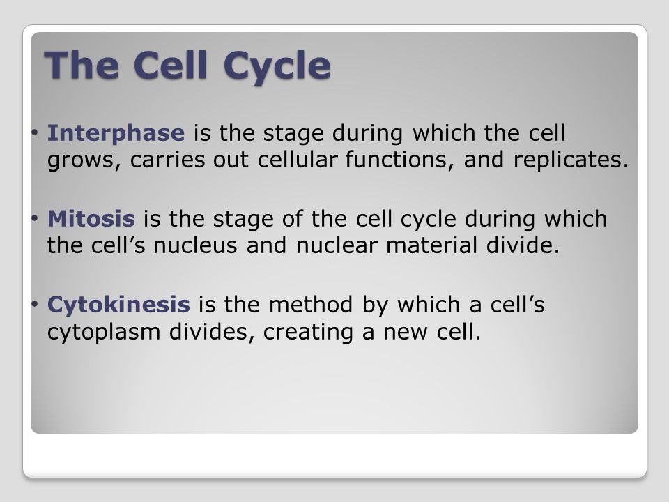 The Cell Cycle Interphase is the stage during which the cell grows, carries out cellular functions, and replicates.