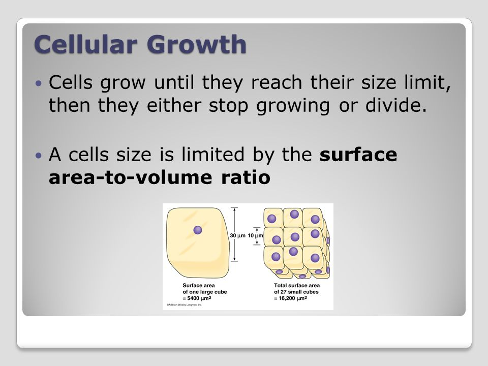 Cellular Growth Cells grow until they reach their size limit, then they either stop growing or divide.