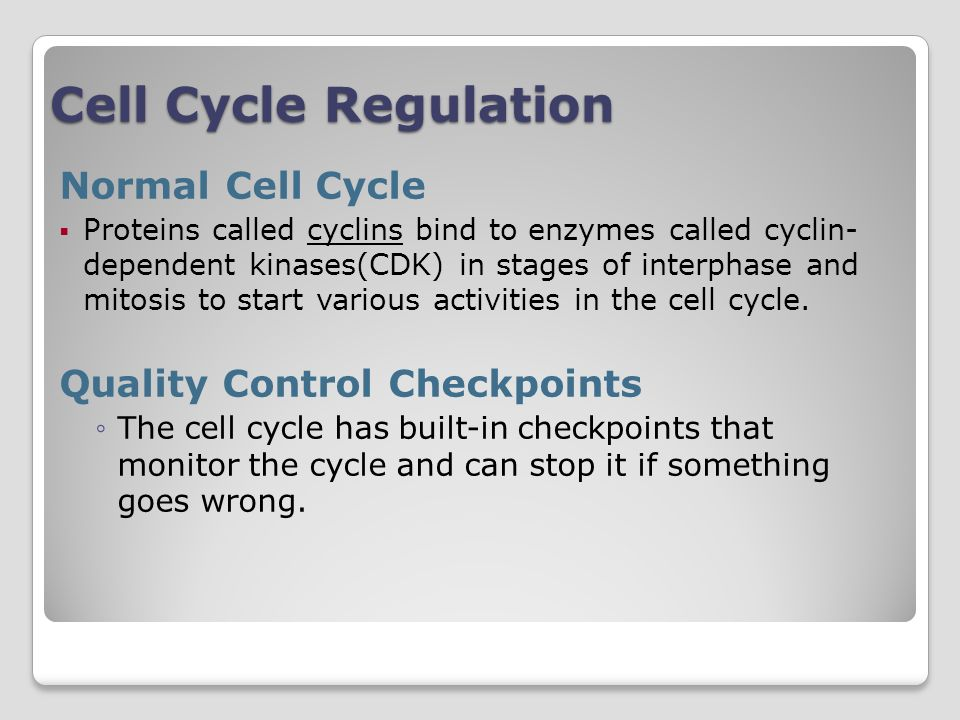 Cell Cycle Regulation Normal Cell Cycle Quality Control Checkpoints