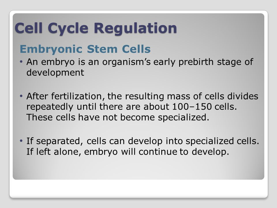 Cell Cycle Regulation Embryonic Stem Cells
