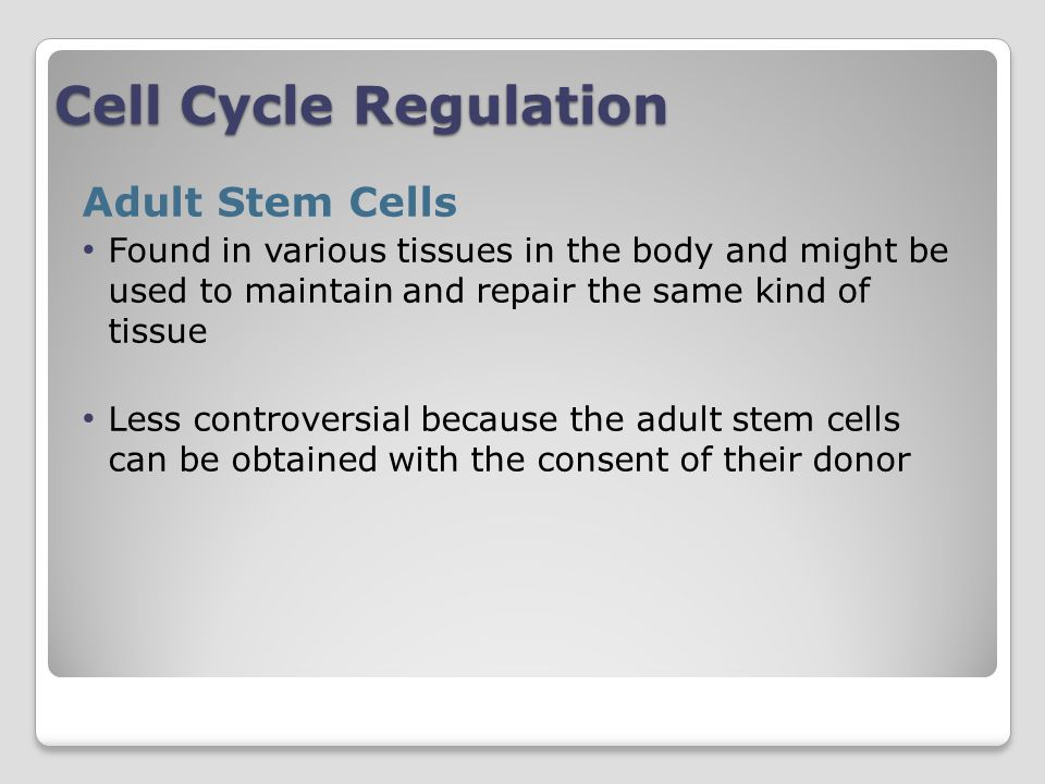 Cell Cycle Regulation Adult Stem Cells