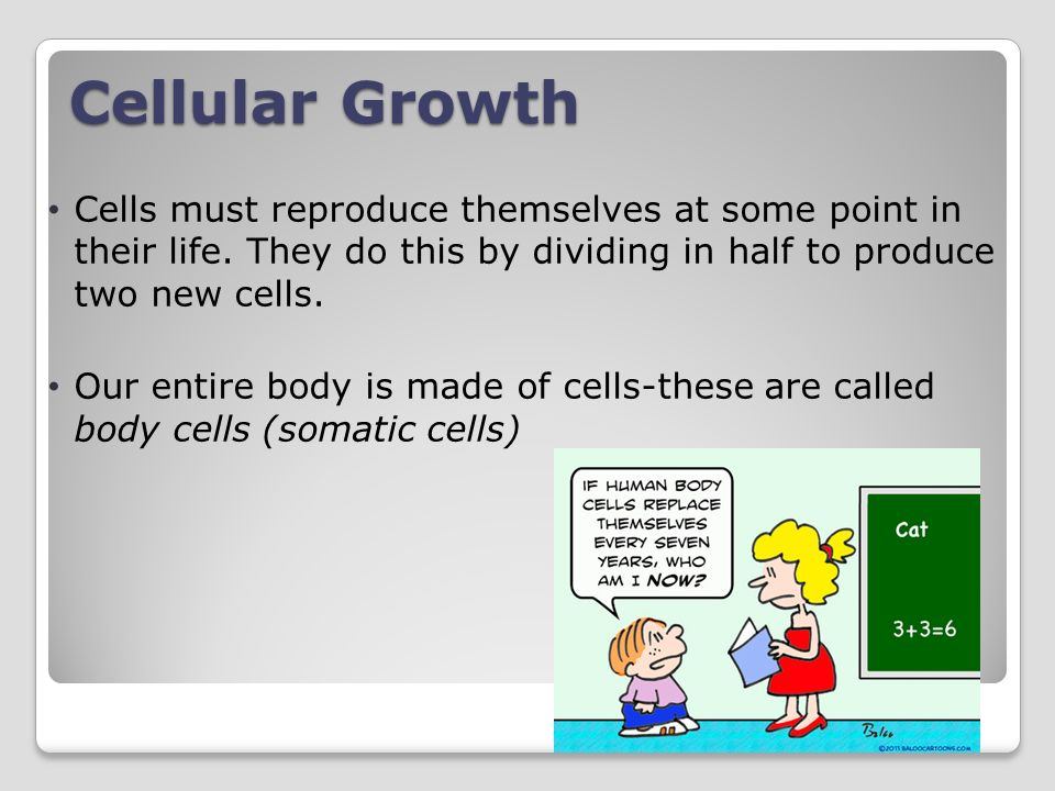 Cellular Growth Cells must reproduce themselves at some point in their life. They do this by dividing in half to produce two new cells.