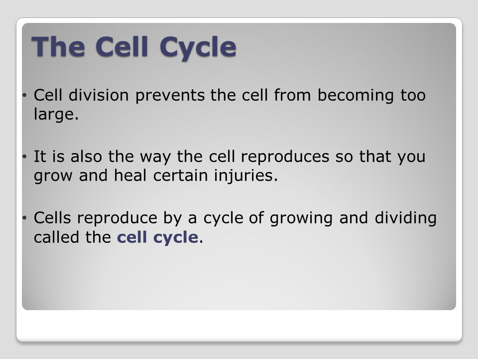 The Cell Cycle Cell division prevents the cell from becoming too large.