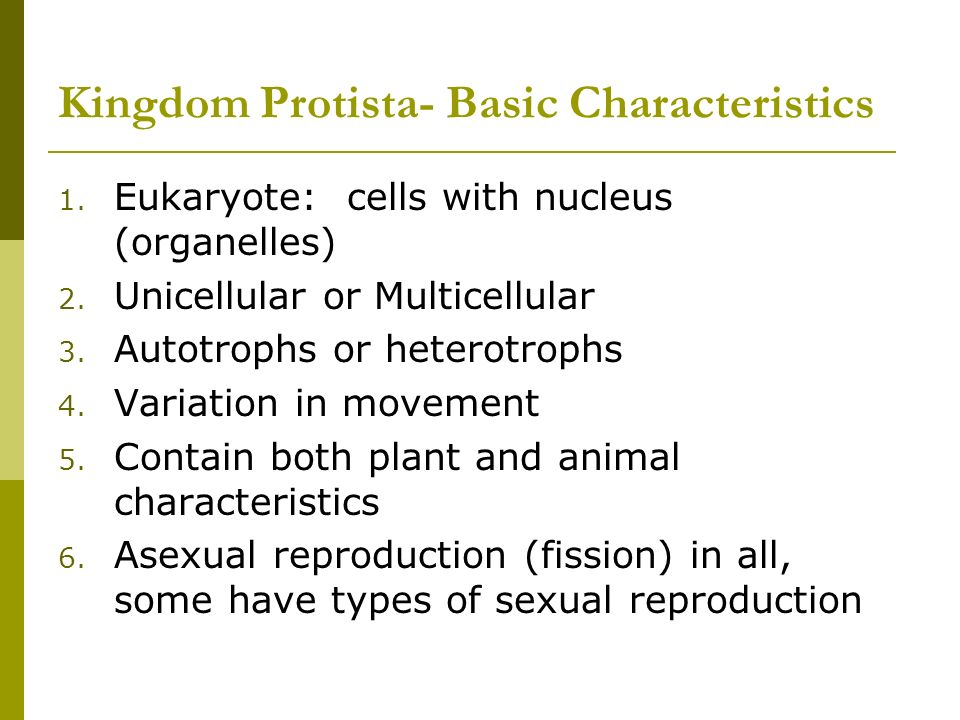 characteristics of protista Protists share only a few general characteristics a key feature of all protists are their eukaryotic cells because protists are eukaryotes, their cell or cells have a nucleus and membrane bound organelles the vast majority of protists are single -celled organisms some single-celled protists live in colonies with.