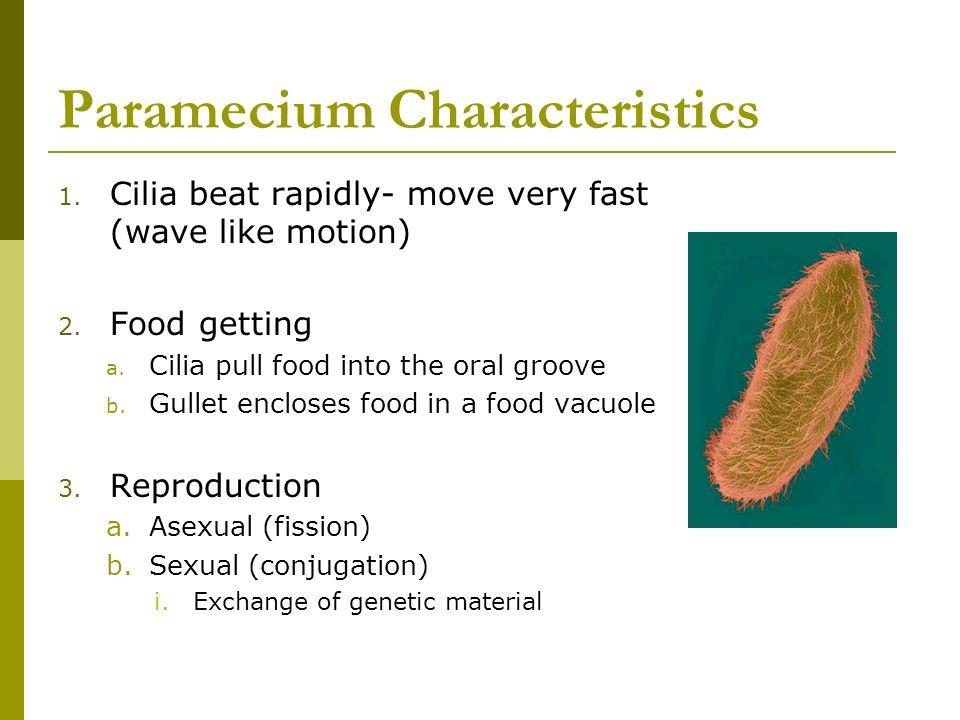 Paramecium Characteristics