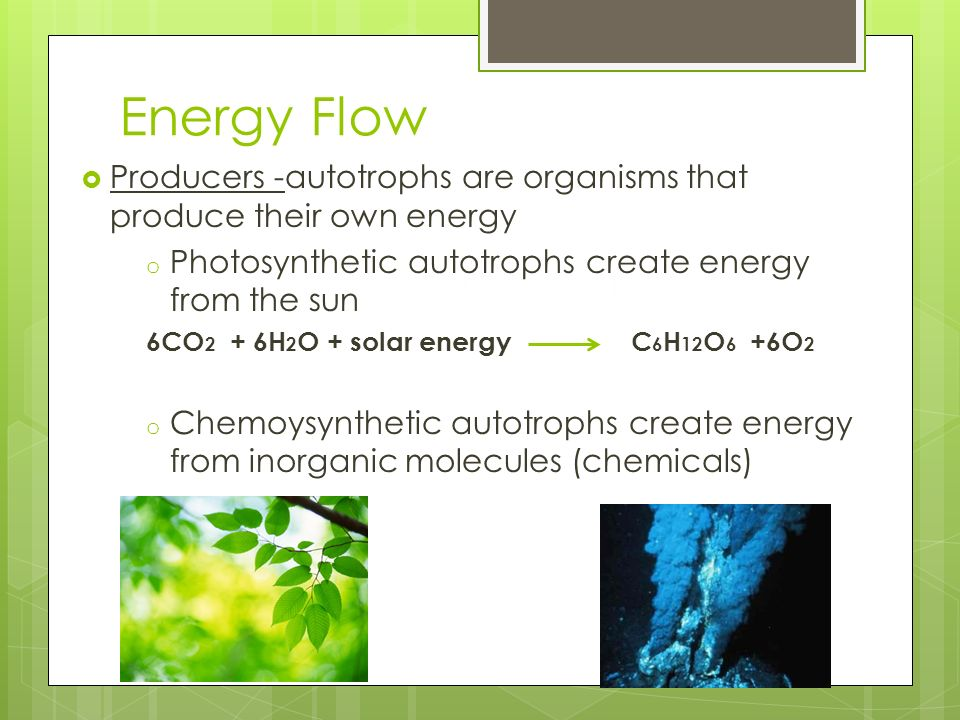 Energy Flow Producers -autotrophs are organisms that produce their own energy. Photosynthetic autotrophs create energy from the sun.