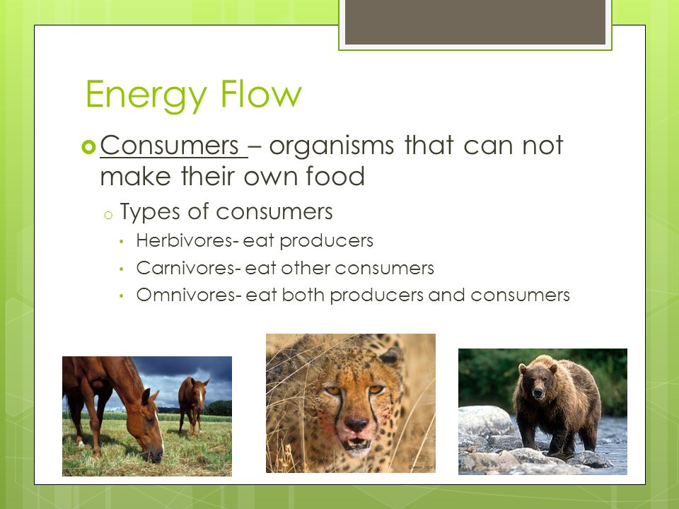 Energy Flow Consumers – organisms that can not make their own food