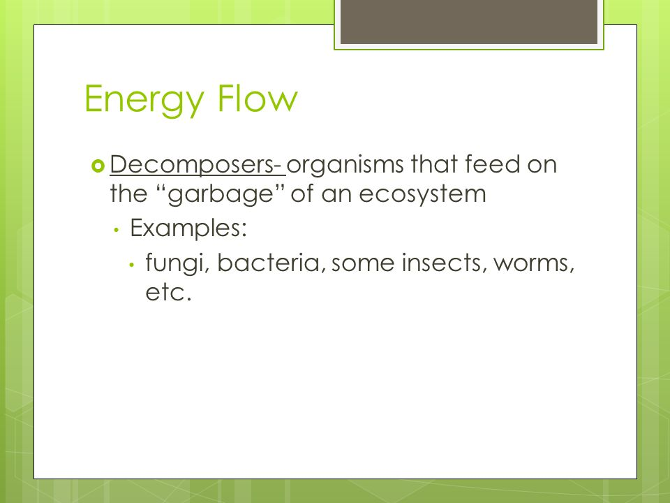 Energy Flow Decomposers- organisms that feed on the garbage of an ecosystem.