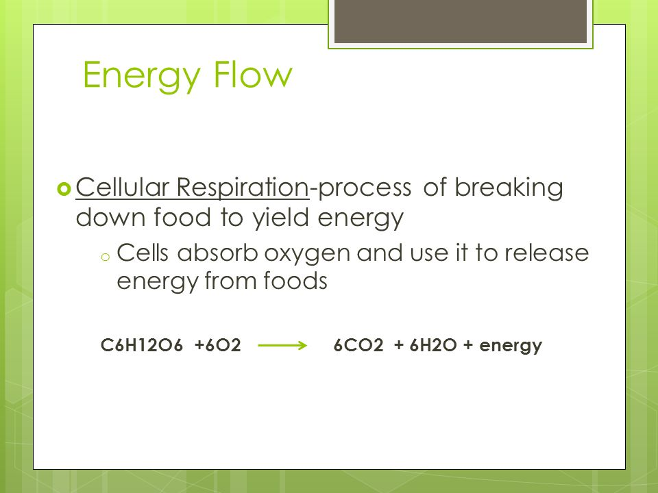 Energy Flow Cellular Respiration-process of breaking down food to yield energy. Cells absorb oxygen and use it to release energy from foods.