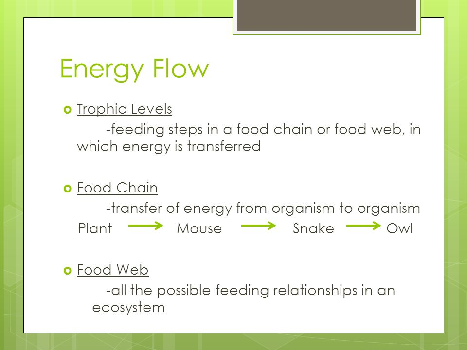 Energy Flow Trophic Levels