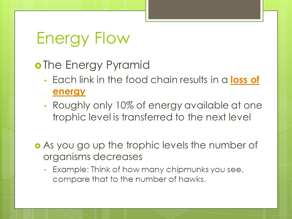 Energy Flow The Energy Pyramid