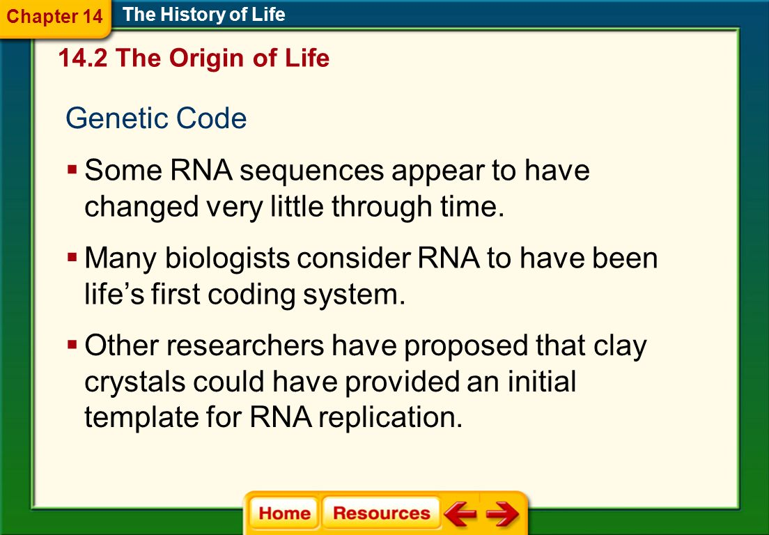 Some RNA sequences appear to have changed very little through time.