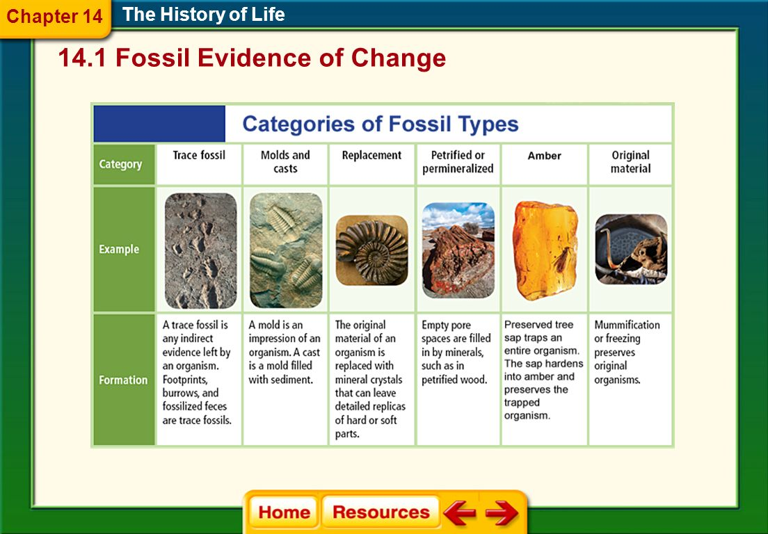 14.1 Fossil Evidence of Change