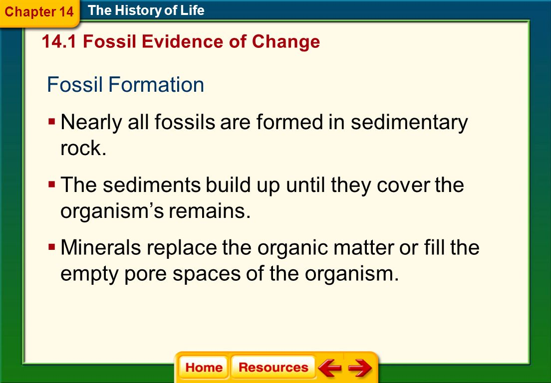 Nearly all fossils are formed in sedimentary rock.